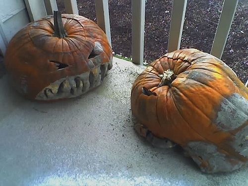 We forgot about the pumpkins.