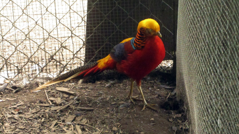 bright-bird