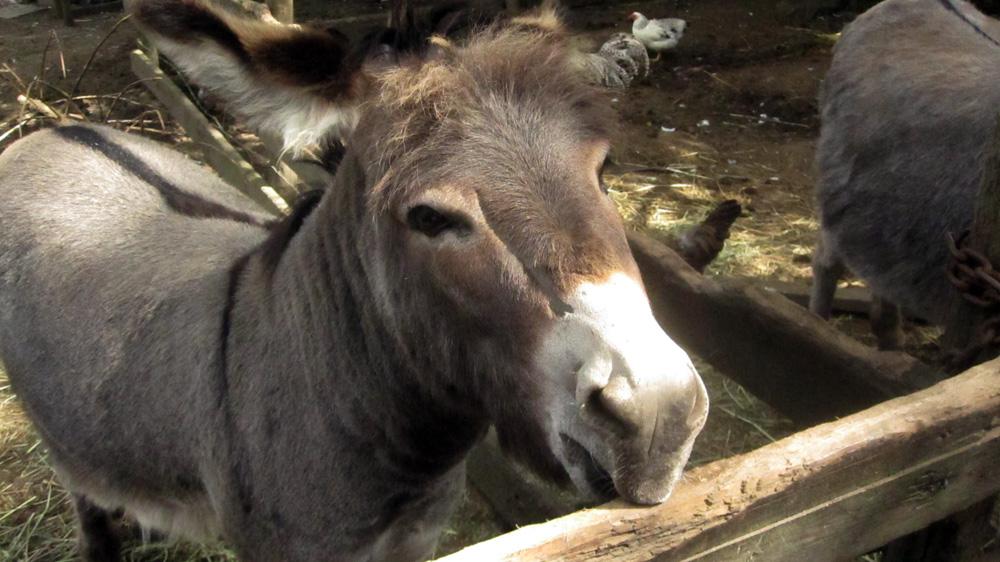 donkey-roo-zoo