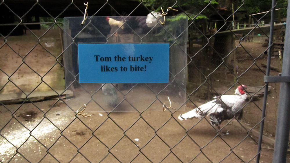 tom-turkey-likes-to-bite