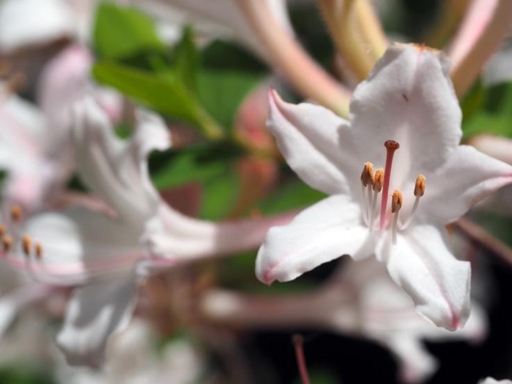 Rhododendron Species Botanical Garden in Federal Way, WA