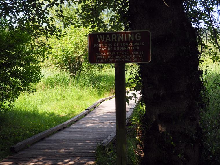 Marshwalks in North Creek