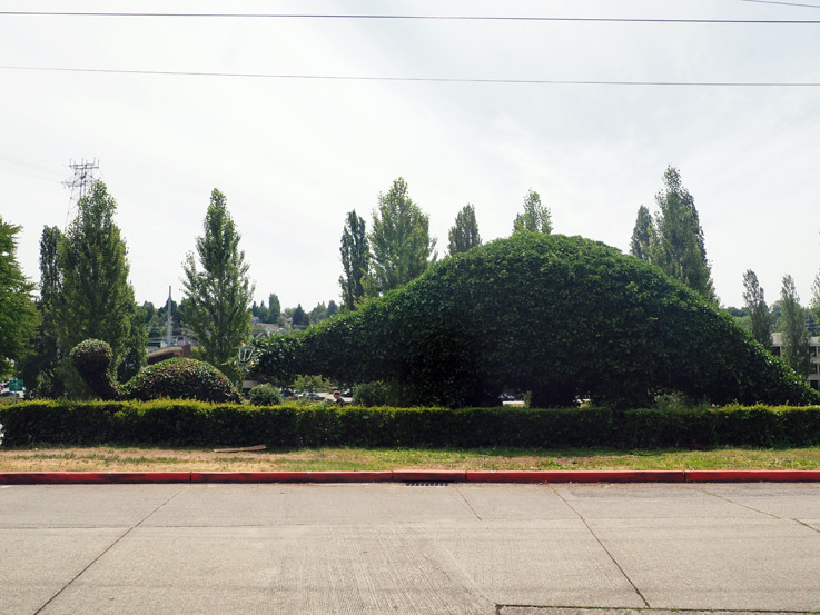Spotted on the Roadside: Dinosaur Topiaries