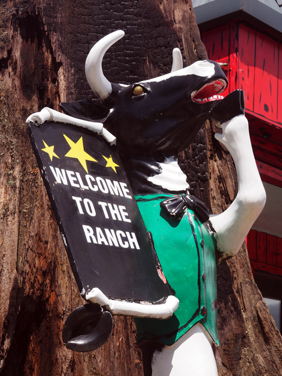 When I Grow Up, I'm Going to Bovine University: The Mattress Ranch in Bremerton, WA