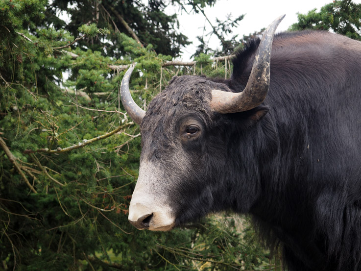 The Olympic Game Farm in Sequim, WA