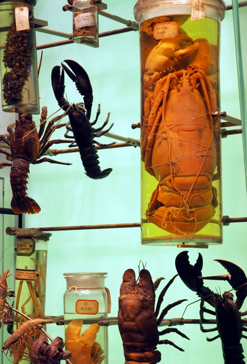 hall-of-biodiversity-crustaceans