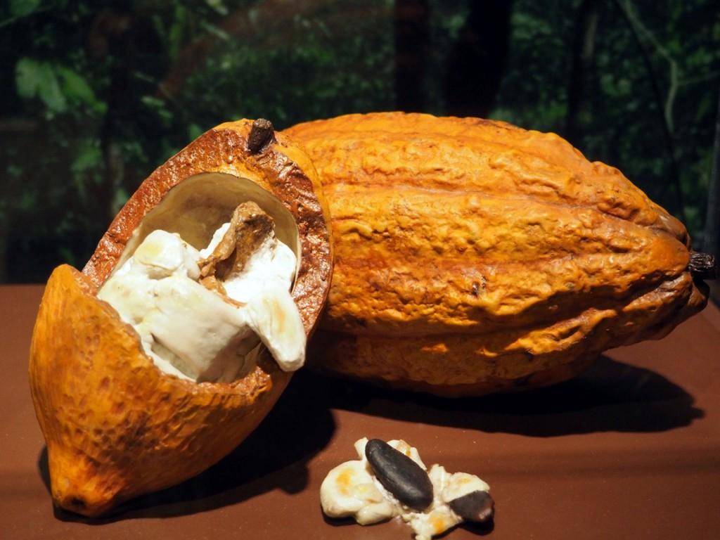 fake cacao pod