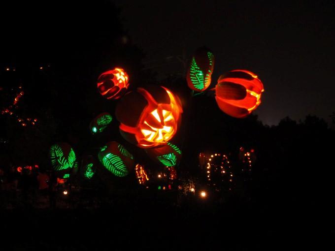 giant pumpkin flowers