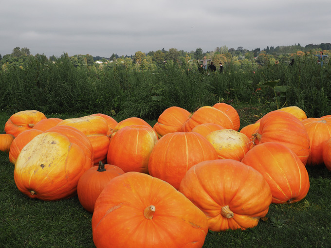 A Fall Adventure in Snohomish
