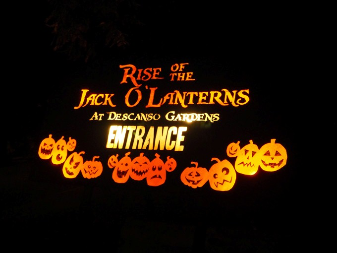 I tromped through the pumpkin patch: Rise of the Jack o Lanterns at Descanso Gardens