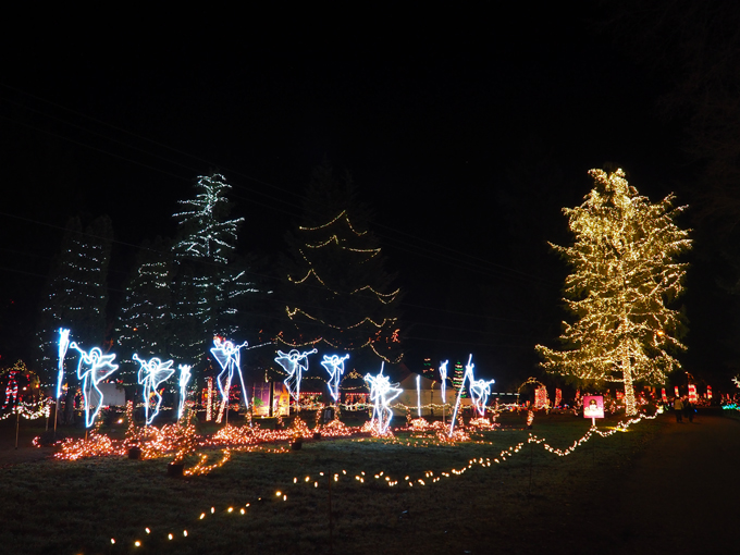 The Lights of Christmas in Warm Beach, WA