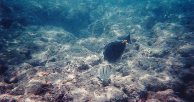 hanauma bay fish