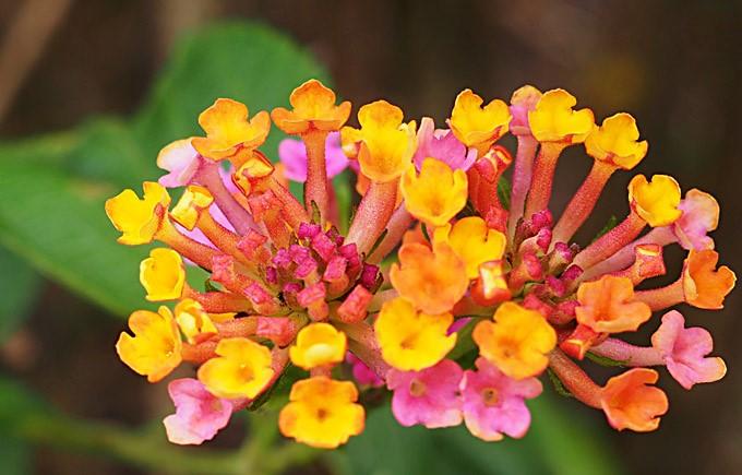 sorbet ombre flowers