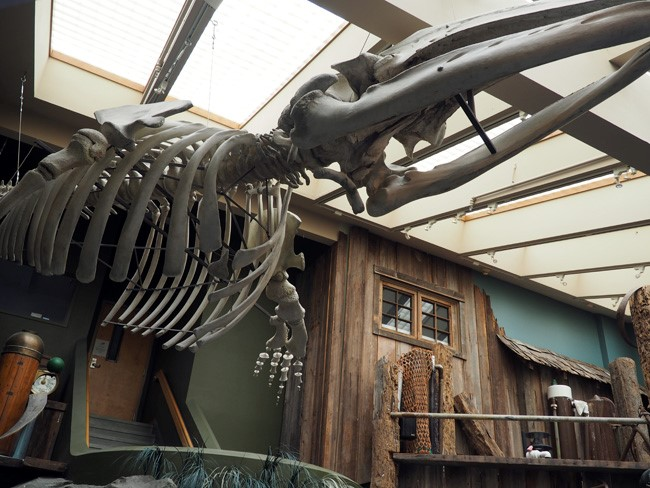 whale skeleton poulsbo aquarium