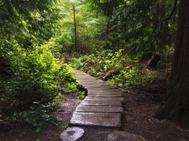 A hike to Cape Flattery