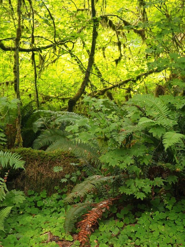 ferns and mosses