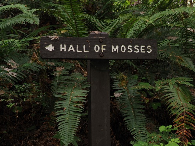 Hiking the Hoh: The Hall of Mosses