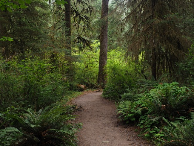 hiking path in hoh