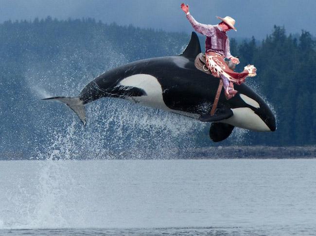 Horseback Riding on Orcas