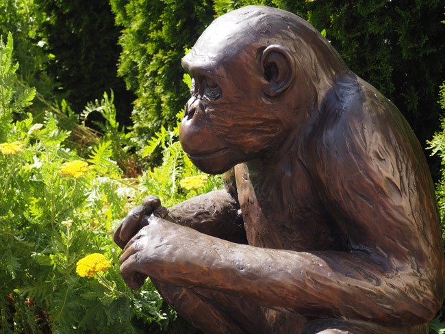 washoe the chimp