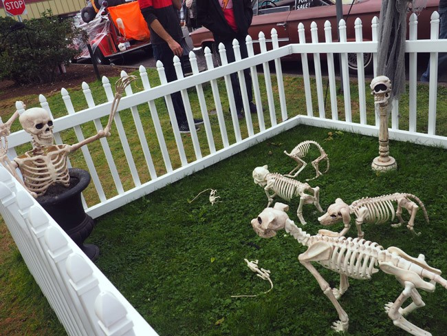 skeleton dog park