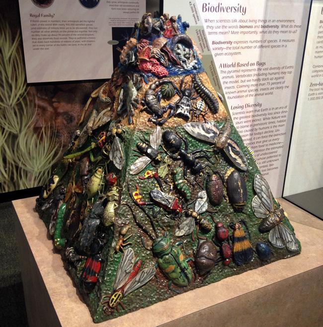 biodiversity pyramid