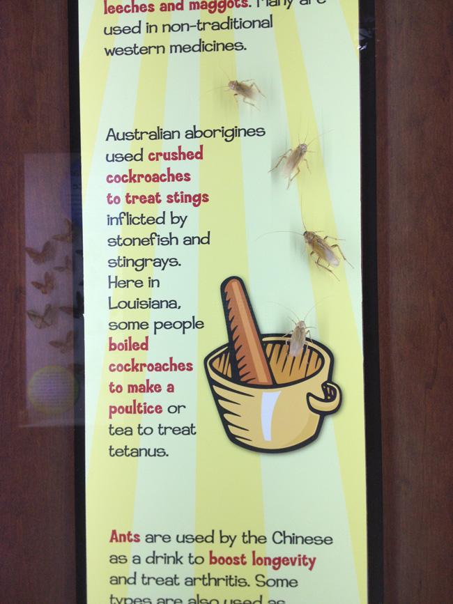 cockroach tea