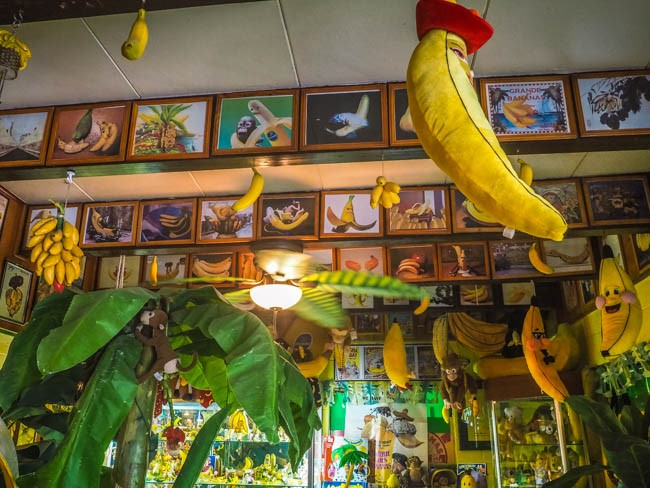 banana museum (22 of 41)