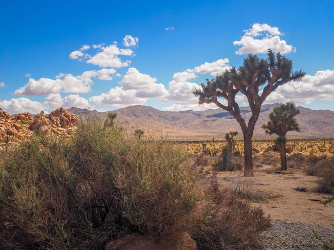 joshua tree (3 of 36)