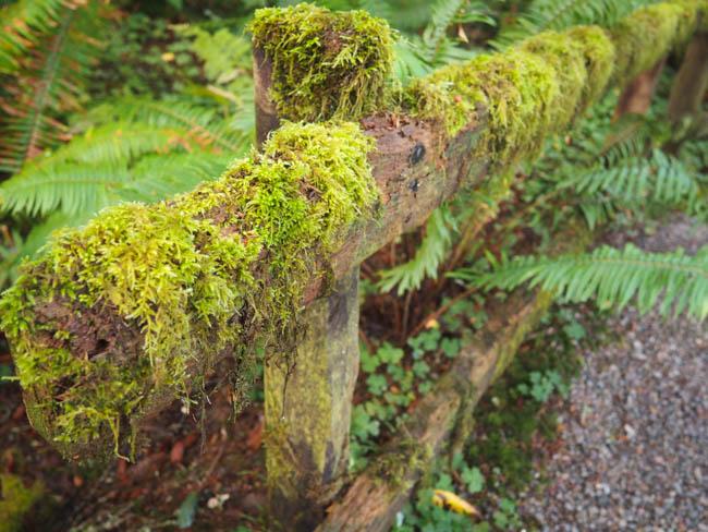 prehistoric-gardens-9-of-52