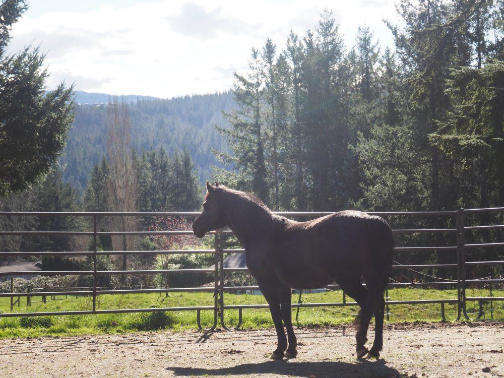 2018 in Horses