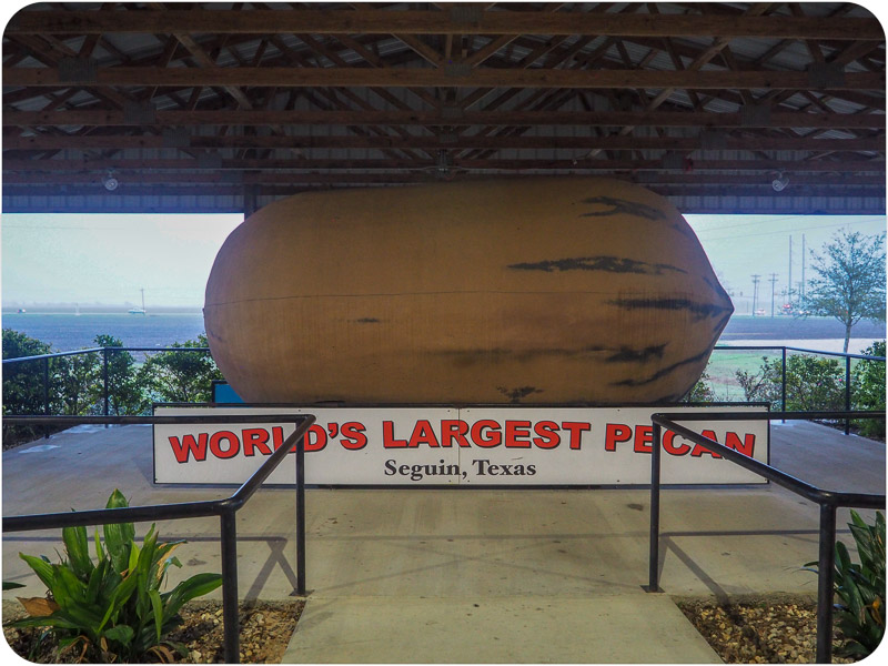 Going Nutty for The World's Largest Pecan(s) in Texas